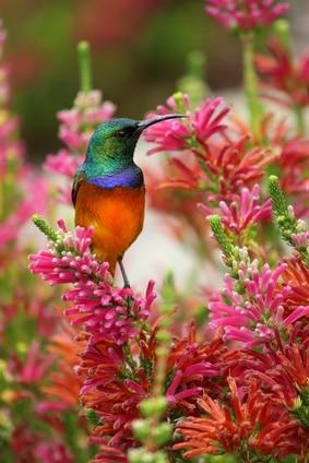 Google Creates Hummingbird Algorithm