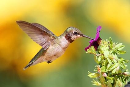 Google Creates Hummingbird